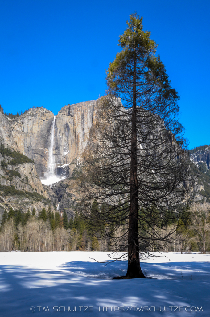 Winter Yosemite Meadow