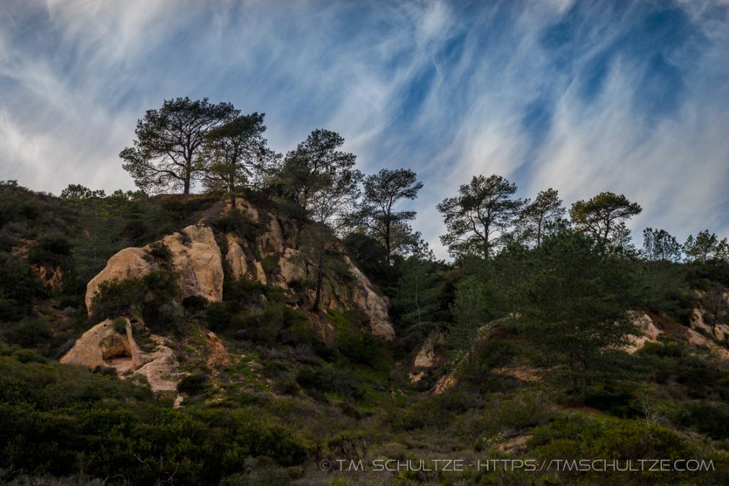 Torrey Pines Bluffs