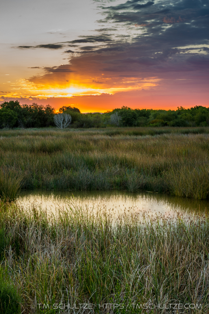 Yuma East Wetlands Inspiration