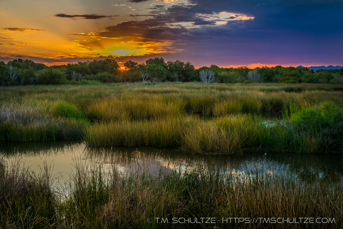 East Wetlands Sunrise