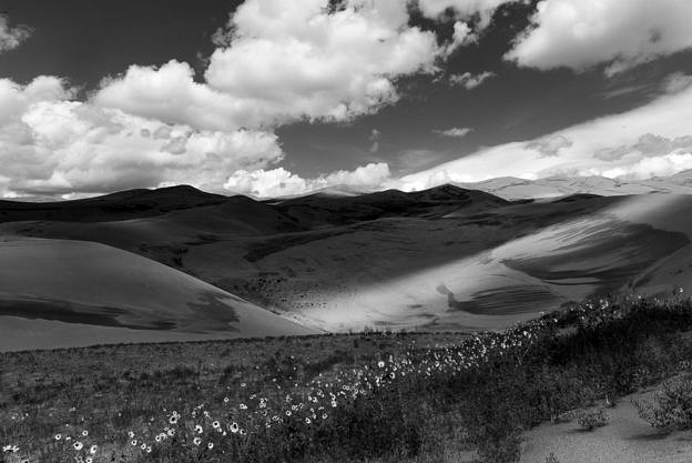 Wildflowers, Great Sand Dunes, Black and White, by T.M. Schultze