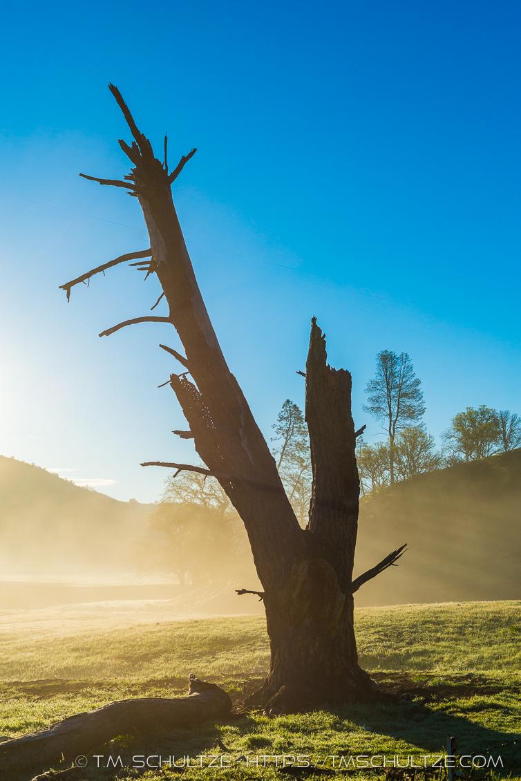Dead Tree Sunrise Mist San Andreas Rift Valley