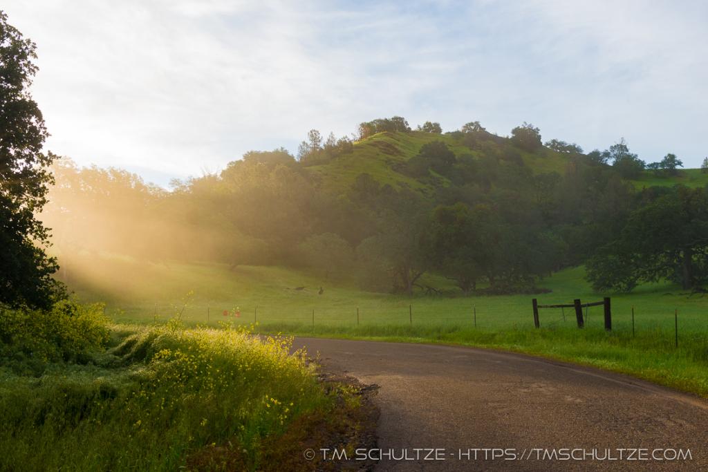 Morning Mist Figueroa Mountain Road