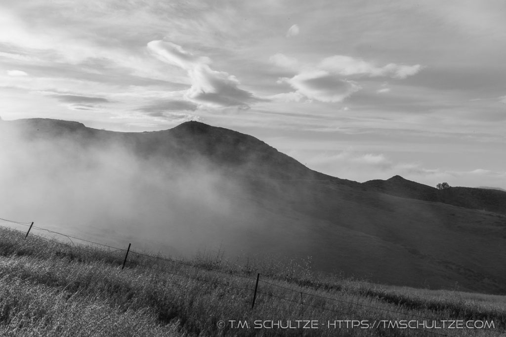 Figueroa Mountain Fog Mist Black And White