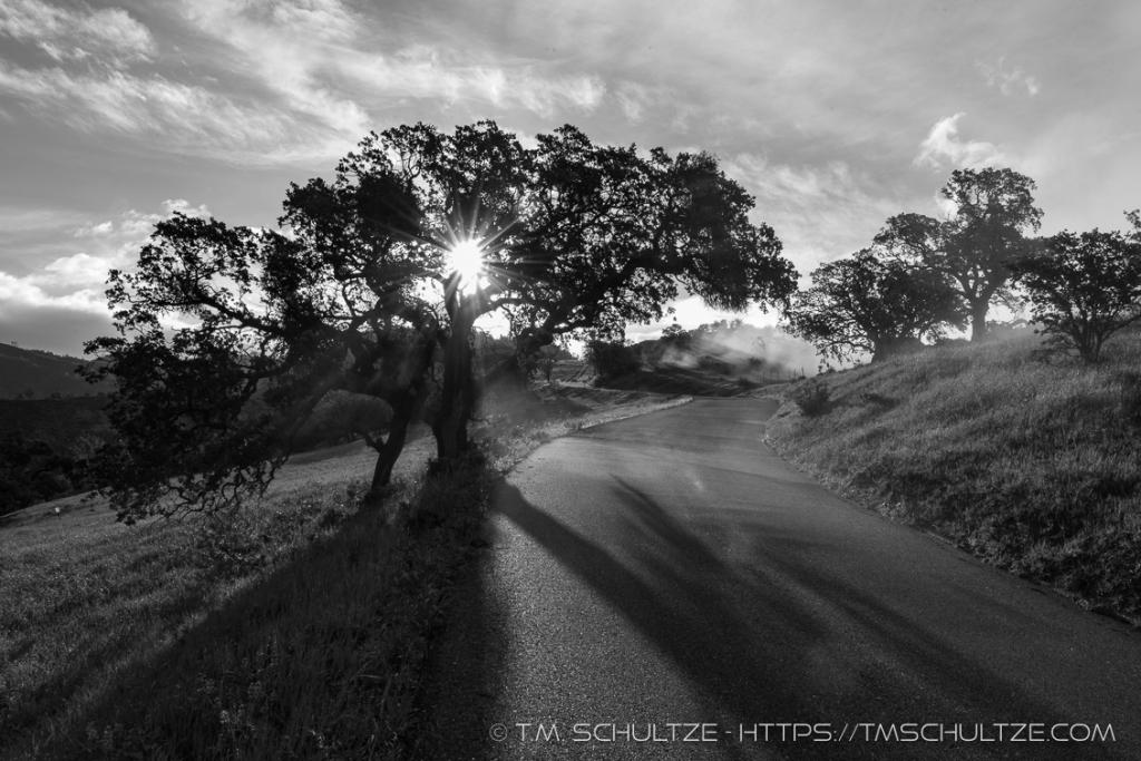 Lone Oak Figueroa Mountain Black and White