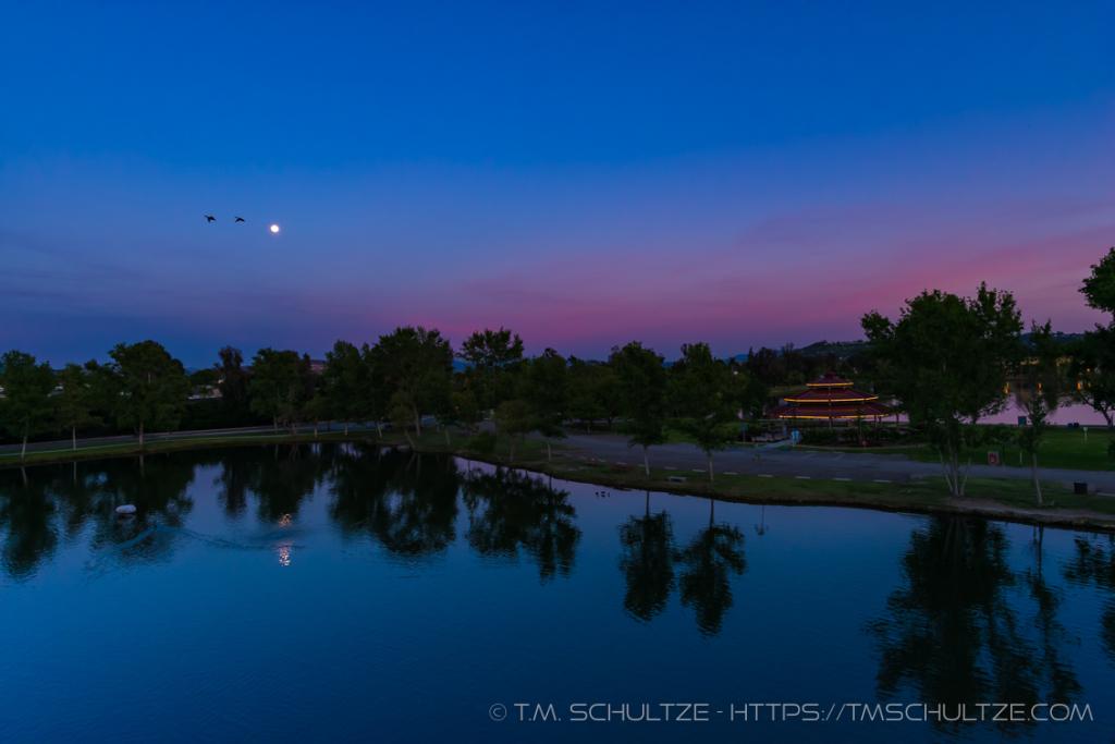Birds Moonlight Santee Lakes