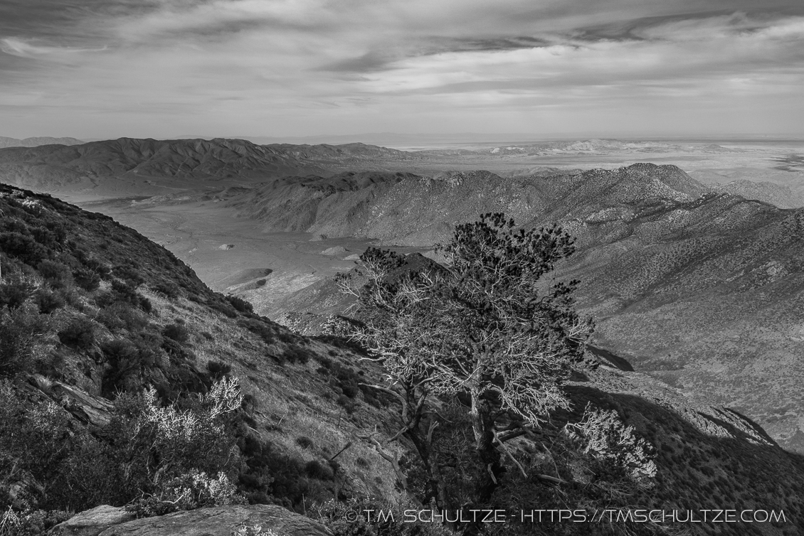 Pinyon Point, May 2017, Black and White, by T.M. Schultze